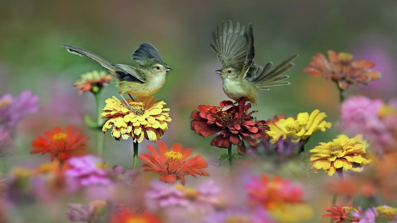 pticy-krylya-hvost-cvety-lug